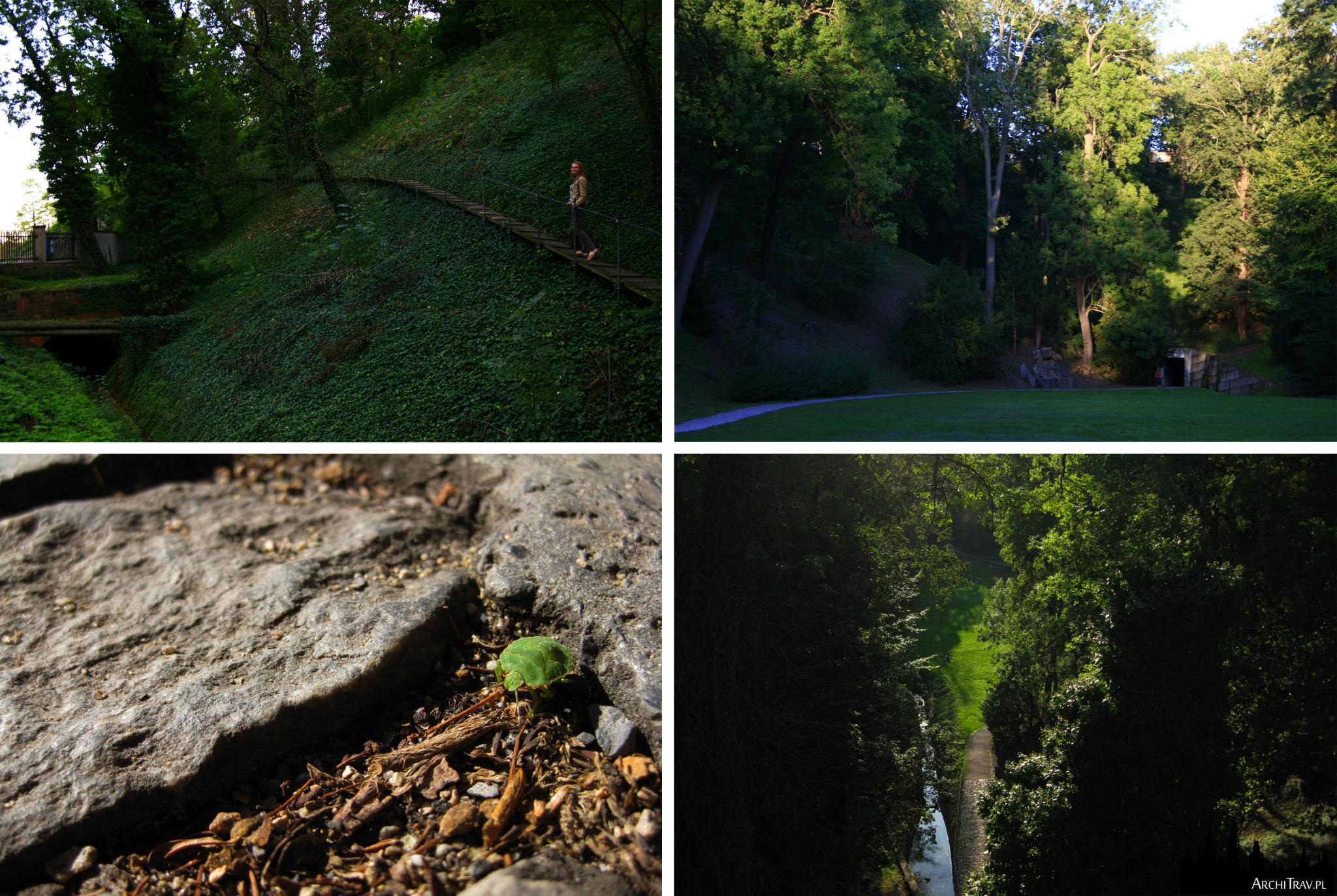 Jeleni Prikop - 4 zdjęcia, soczysta zieleń, spokój, słońce