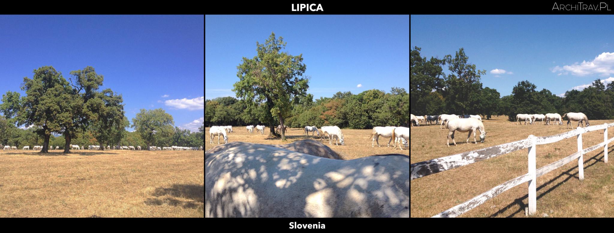 Slowenia Lipica