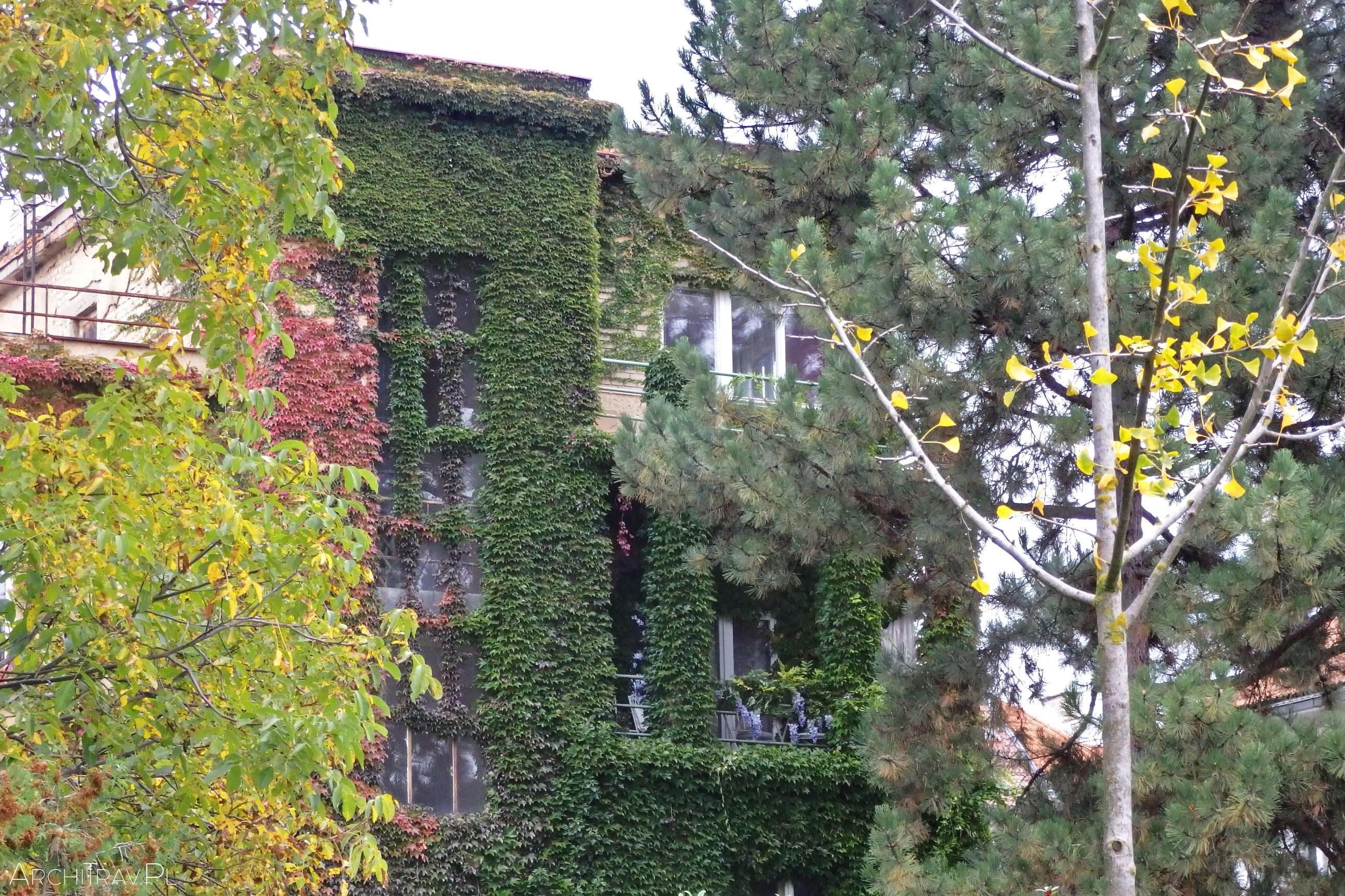 zarośnięty bluszczem budynek